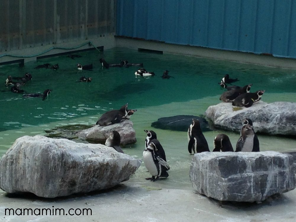 Folly Farm Review - lovefrommim.com Tenby What to do at Bluestone Wales