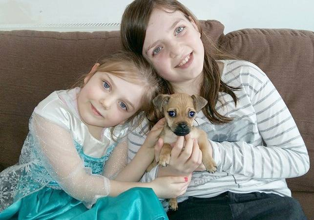 5 Tips for a Happy Child and Puppy home! www.mamamim.com #MyFiveThings by LifewithMrsB Rachel Bitmead Mummy Blogger Parenting New Family Pet