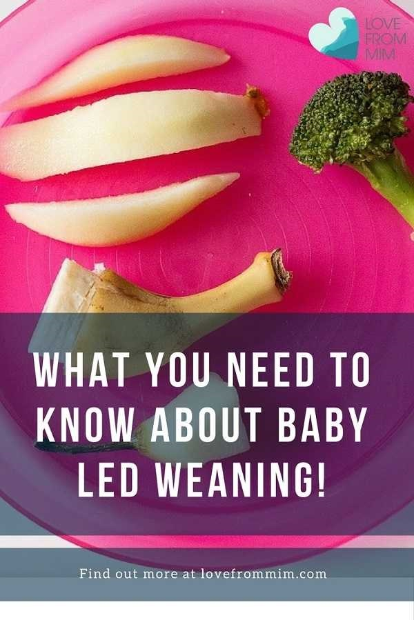5 Things Parents Should Know About Baby Led Weaning! Love from Mim