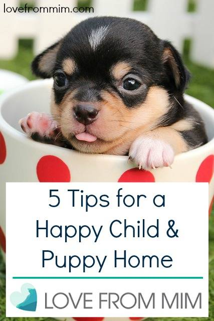 5 Tips for a Happy Child and Puppy home! www.lovefrommim.com #MyFiveThings by LifewithMrsB Rachel Bitmead Mummy Blogger Parenting New Family Pet