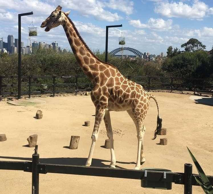 Taronga Zoo Review - Tips for Families - Love from Mim