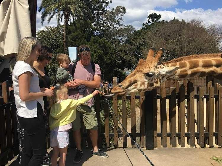 Taronga Zoo Review - Love from Mim