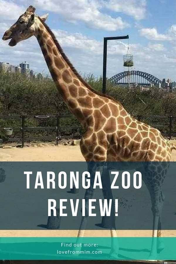 Before you head to Taronga Zoo Sydney, check out my Taronga Zoo review - it's packed with advice and tips for Families going to the zoo! - Love from Mim #taronga #tarongazoo #sydneyzoo #tarongazooreview #zooreview #australiazoo #australiazoos #zooreviews #tarongavreviews