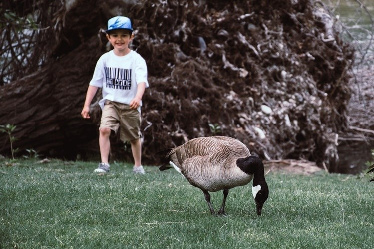 Child and goose on grass